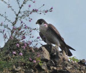 Silver Bay birding